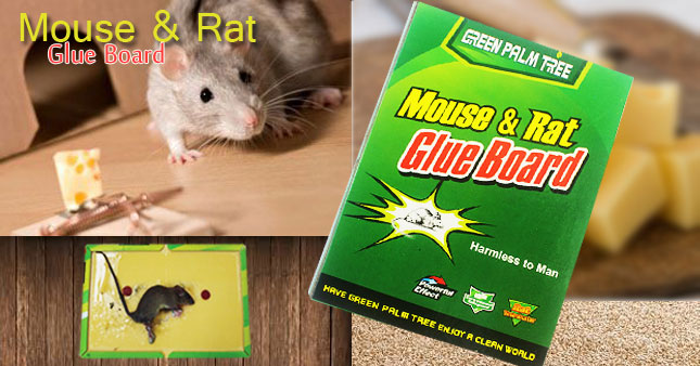 50% OFF! Mouse Glue Trap worth Rs. 300 for just Rs. 150! No Poisons! No metal springs!